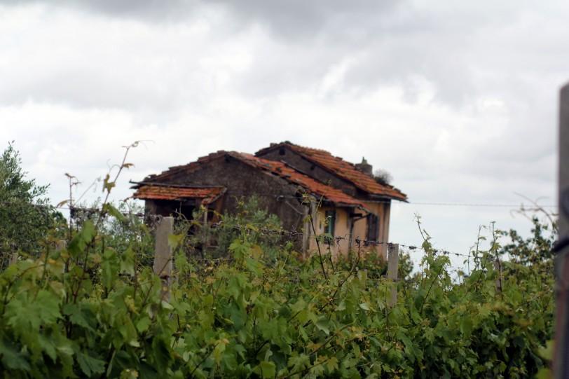 winery6