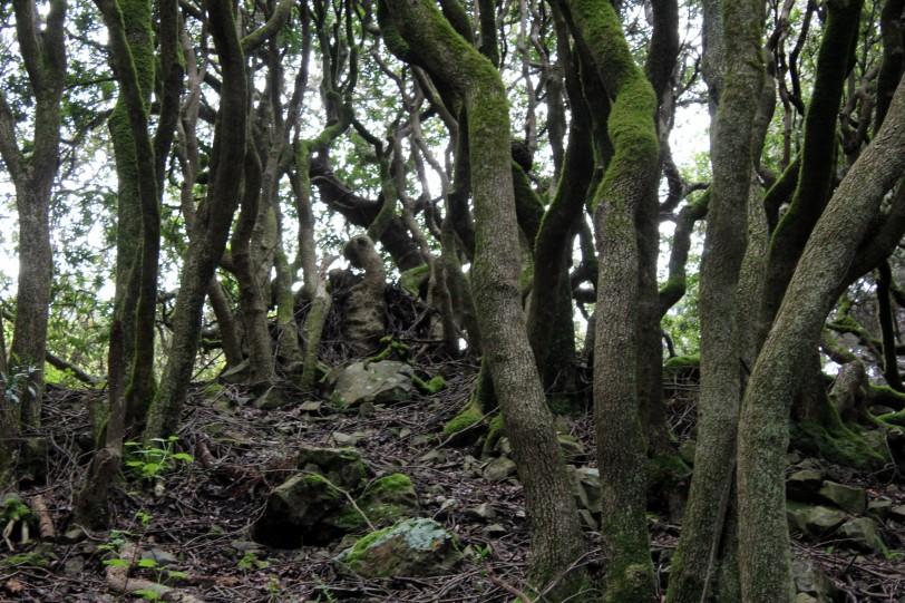hike9